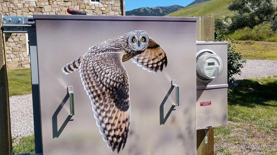 Grey Owl Vinyl Utility Box Wrap